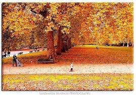 hyde park fall